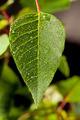 Dew on Leaf - PhotoDune Item for Sale