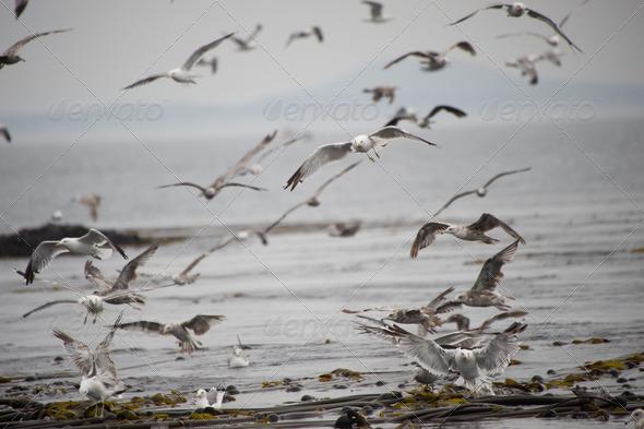 PhotoDune Flock of seagulls on the sea 3794689
