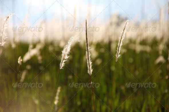 PhotoDune grass field 3794759