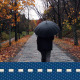 Autumn Forest Rain Walk - VideoHive Item for Sale