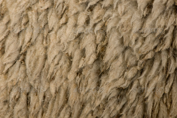 Close-up of Arles Merino Sheep Wool