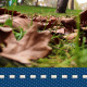 Autumn Leaf Falling - VideoHive Item for Sale