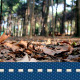Autumn Walk In Forest 2 - VideoHive Item for Sale