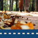 Autumn Walk In Forest 6 - VideoHive Item for Sale