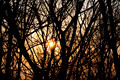 Sunset hided by trees - PhotoDune Item for Sale