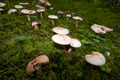 Wild Mushrooms on Moss - PhotoDune Item for Sale