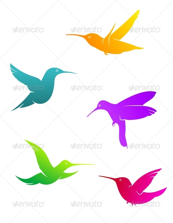 Colorful flying hummingbirds