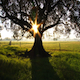 The Old Tree - VideoHive Item for Sale
