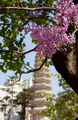 Pink Flowers and Tower - PhotoDune Item for Sale
