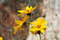 Yellow flowers with bokeh - PhotoDune Item for Sale