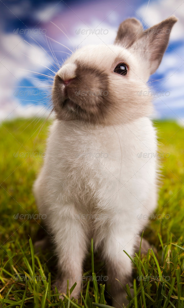 Animal easter  - Stock Photo - Images