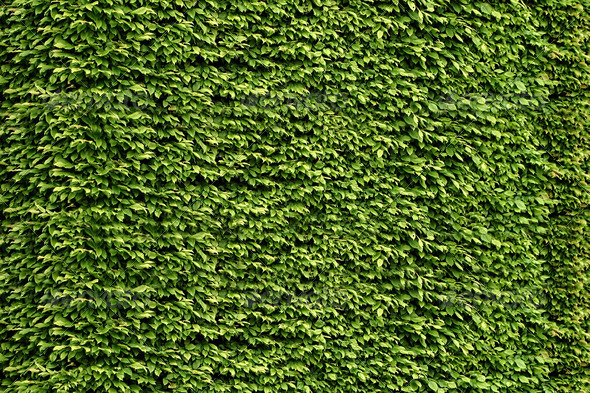 PhotoDune green leaf background 3814774