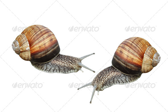 PhotoDune Two garden snails isolated 3814776