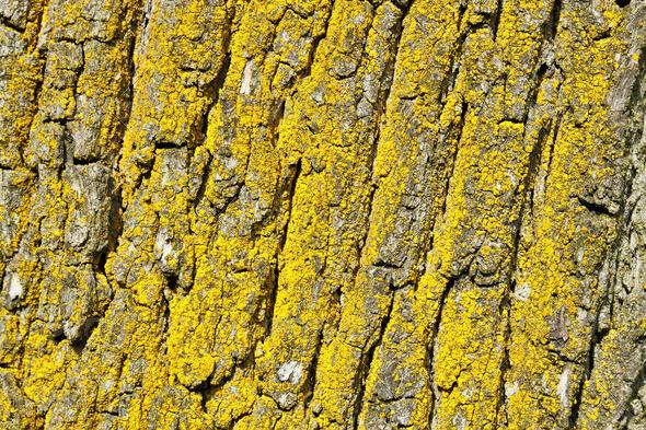 PhotoDune tree bark texture 3814800