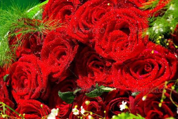 PhotoDune red roses 3815140