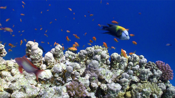 [VideoHive 3818626] Colorful Fish On Vibrant Coral Reef 6 | Stock Footage