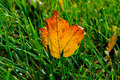 Leaf in the grass - PhotoDune Item for Sale