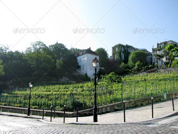 PhotoDune vineyards in Paris 3826667