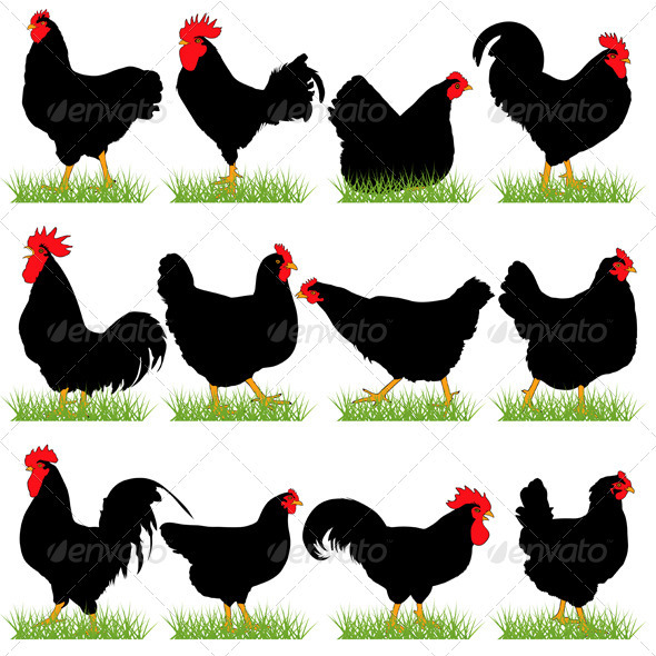 GraphicRiver 12 Roosters and Hans Silhouettes Set 3829157