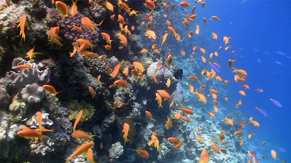 Colorful Fish on Vibrant Coral Reef 2