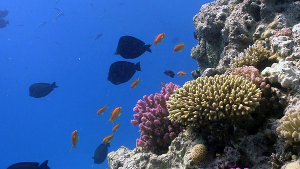 Colorful Fish on Vibrant Coral Reef 6