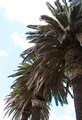 Tree Palm - PhotoDune Item for Sale
