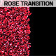 Rose Petal Transition - VideoHive Item for Sale