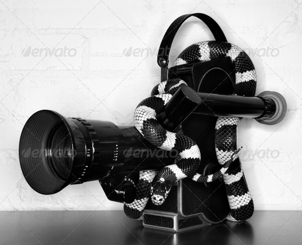 California Kingsnake on movie camera - Stock Photo - Images