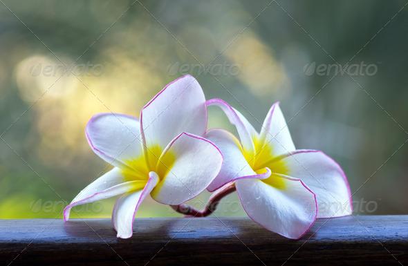 PhotoDune flowers 3851098