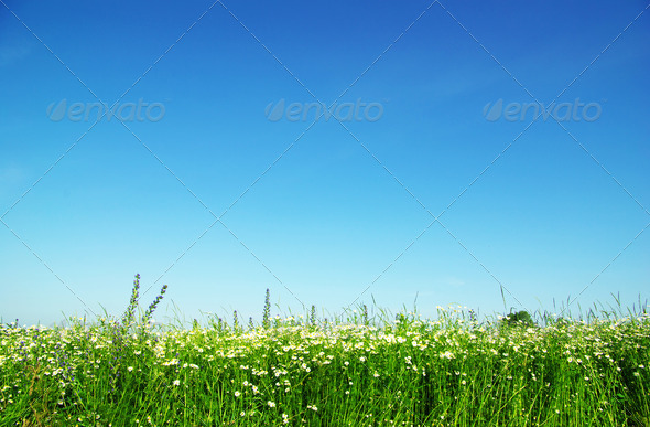 PhotoDune green field 3851105