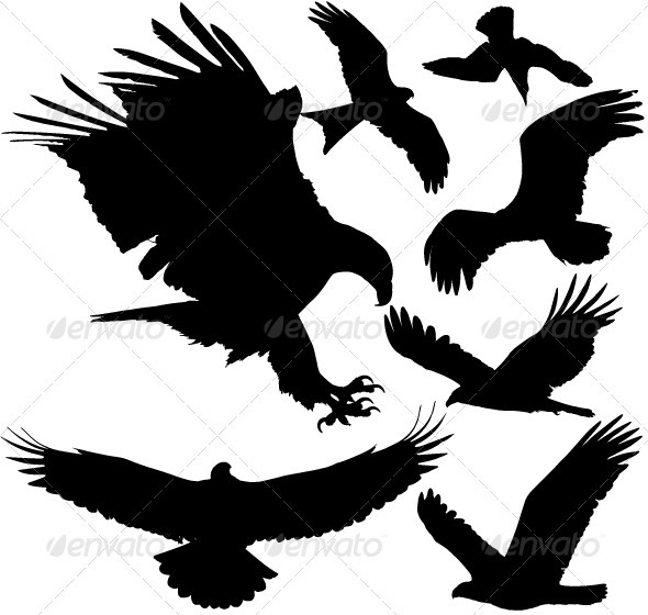 GraphicRiver Birds of Prey Vector Silhouettes 3853786