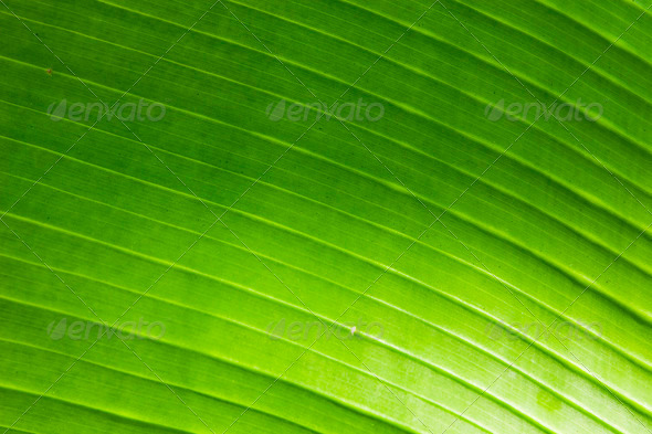 PhotoDune abstract background from the brightly green leaf of palm 3853795