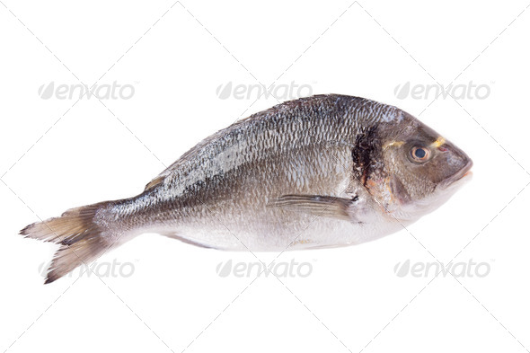 PhotoDune Dorado fish isolated on white 3854184