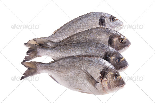 PhotoDune Four dorado fish isolated on white 3854185