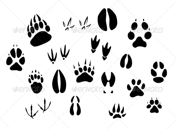 GraphicRiver Animal Footprints Silhouettes 3855188