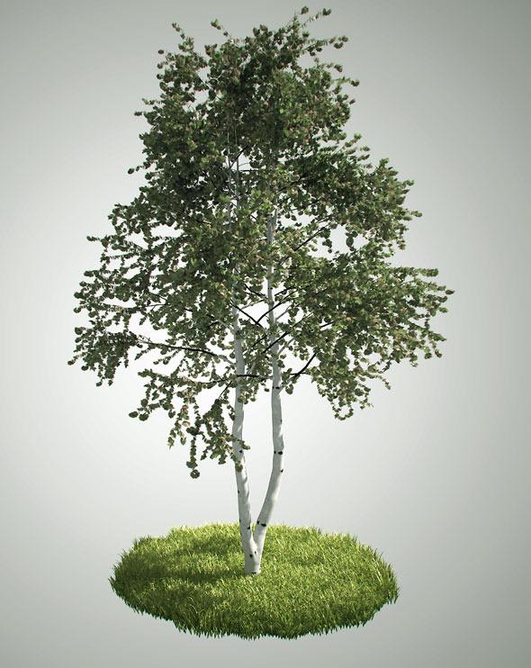 Tree betula pendula - 3DOcean Item for Sale
