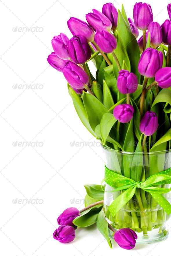 PhotoDune purple tulips 3866270