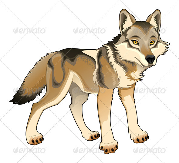 Wolf Vector Isolated Character