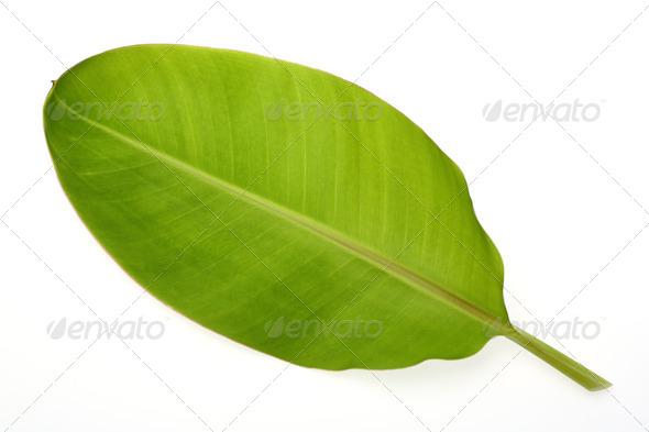 PhotoDune Banana leaf 3883319