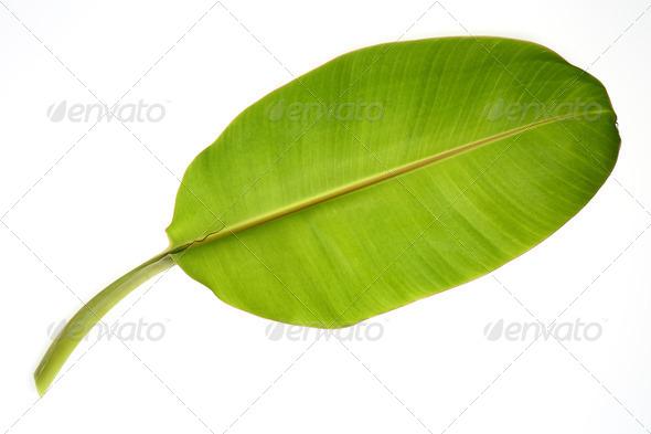 PhotoDune Banana leaf 3883320