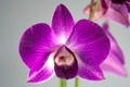 Orchidee - PhotoDune Item for Sale