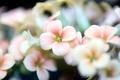 Flower Power - PhotoDune Item for Sale