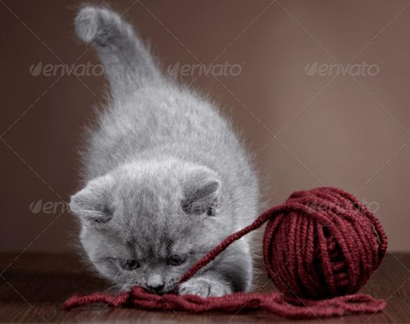 PhotoDune ball of yarn and kitten 3884680