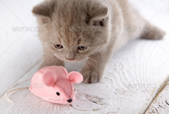 PhotoDune kitten and pink mouse 3889042