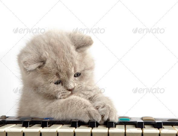 PhotoDune kitten and piano 3891203