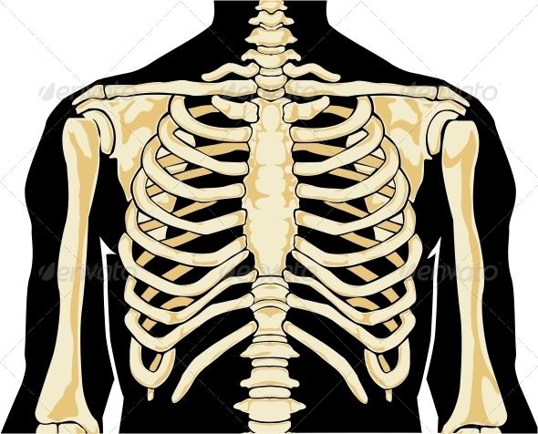 GraphicRiver Human Anatomy 3917344