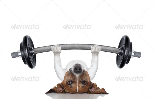 personal trainer dog - Stock Photo - Images