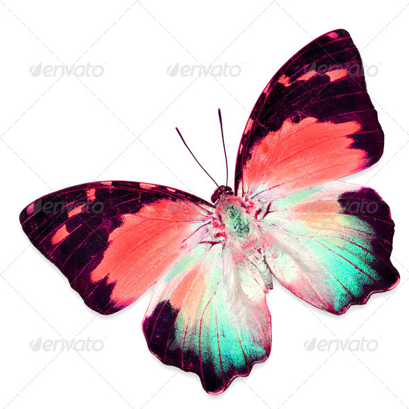 PhotoDune colorful butterfly 3919974