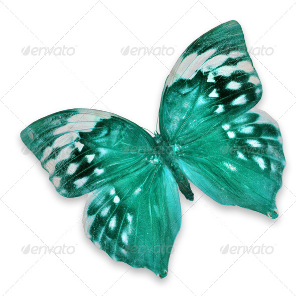 PhotoDune Blue butterfly 3919978