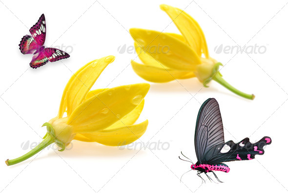PhotoDune Ylang-Ylang Flower with butterfly 3919981